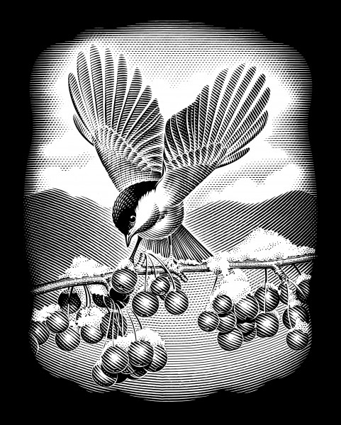 Reeves Gravurfolien Silber Vogel mit Beeren