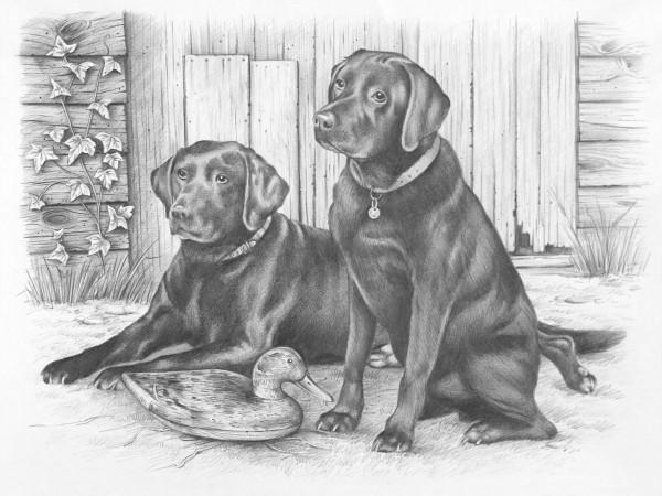 Reeves Skizzieren nach Zahlen Labrador