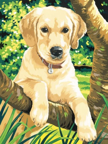 Reeves Malen nach Zahlen Junior Labrador