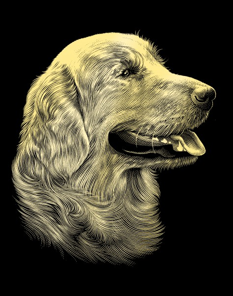Reeves Gravurfolien Gold Retriever Portrait
