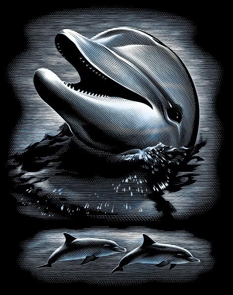 Reeves Gravurfolien Silber Delphinportrait