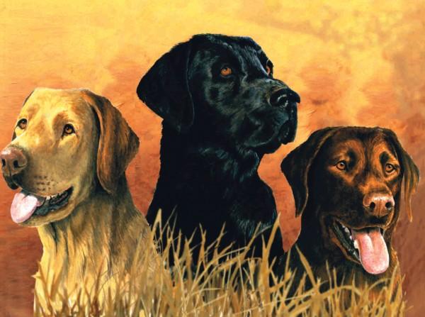 Reeves Artist Collection Malen nach Zahlen Labradore im Sumpf