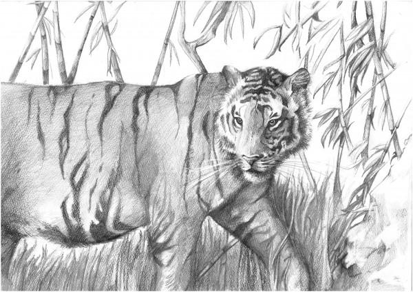 Reeves Skizzieren nach Zahlen Tiger