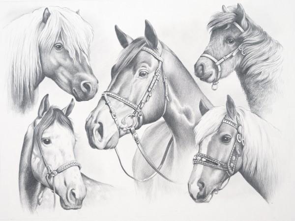 Reeves Skizzieren nach Zahlen Pferdeköpfe