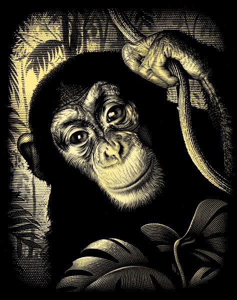 Reeves Gravurfolien Gold Schimpanse